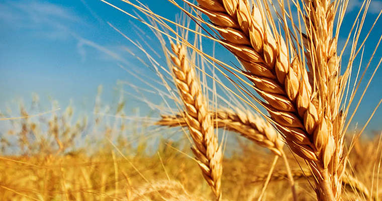 Сезон страхування сільськогосподарської продукції